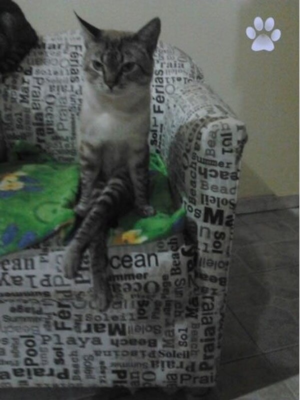 Funny cats - part 325, best funny cat, cat pictures