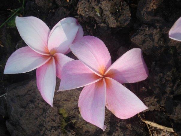 The Pidgin Diaries: HOWZIT!? PIDGIN (Hawaiian Creole English