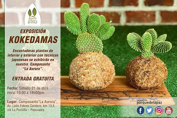 Exposición-plantas-Kokedamas-Camposanto