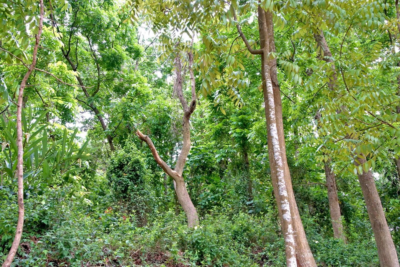 [台南][官田區] 川文山森林生態保育農場|適合親子的入門步道|官田小陽明山