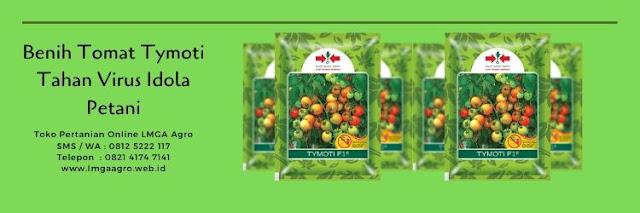 benih tomat tymoti,tomat tymoti,budidaya tomat,tanaman tomat,benih tomat,lmga agro