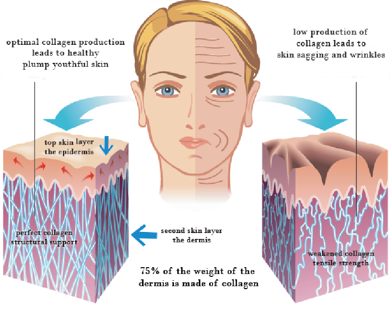 How To Increase Collagen Production In The Body Naturally