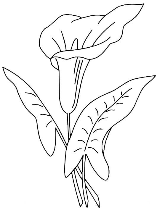 Tranh tô màu bông hoa 13