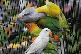 Harga jual dan beli burung di pasar hewan dan unggas 2018