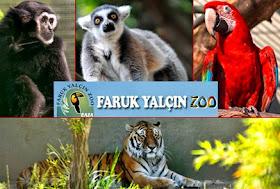 حديقة الحيوانات في اسطنبول تركيا