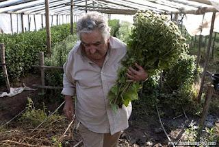 Tổng Thống Jose Mujica hái hoa cúc bán