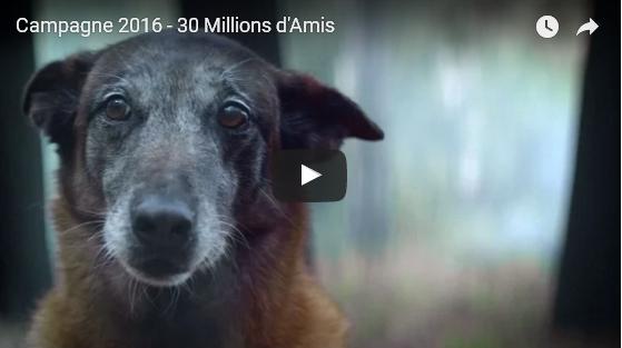 El vídeo de fidelidad y abandono animal más triste que se ha hecho nunca