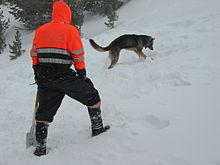 σκυλιά διάσωσης