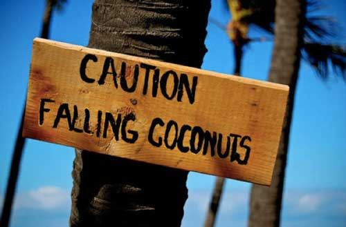 death by falling coconut