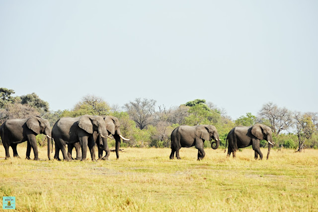 Elefantes en la Reserva de Moremi de Botswana