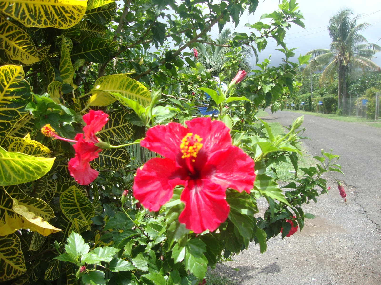 Jorgensensjourneys tropical flowers some we have seen before when we lived in hawaii and some are totally new we dont know the names so have fun looking at the pictures izmirmasajfo