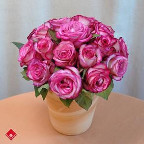 gambar bunga mawar indah 38