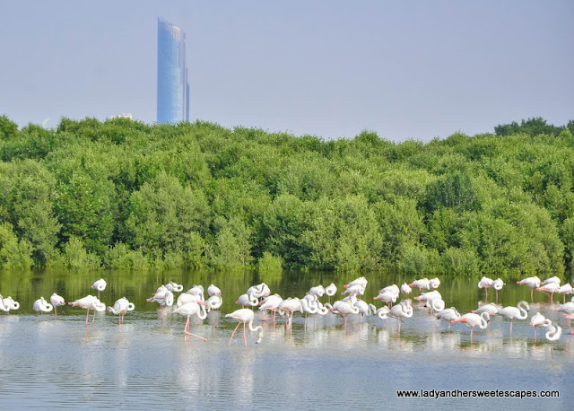 Ras Al Khor Wildlife Sanctuary
