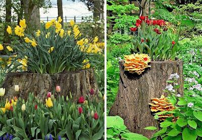 Jardinera incrustada en tronco de árbol talado