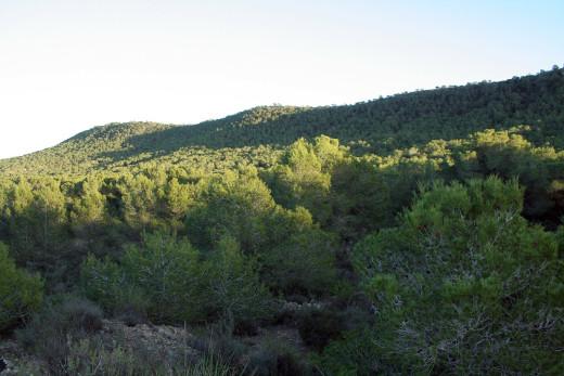 La Conselleria de Agricultura, Medio Ambiente, Cambio Climático y Desarrollo Rural va a destinar 1.500.000 euros a ayudas para la redacción de nuevos Planes Locales de Prevención de Incendios Forestales (PLPIF), o para la revisión de los ya aprobados, a los municipios de la Comunitat Valenciana.