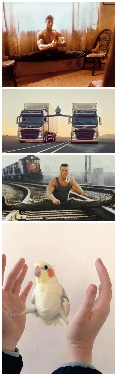 Funny Jean-Claude Van Damme Fan Joke Picture