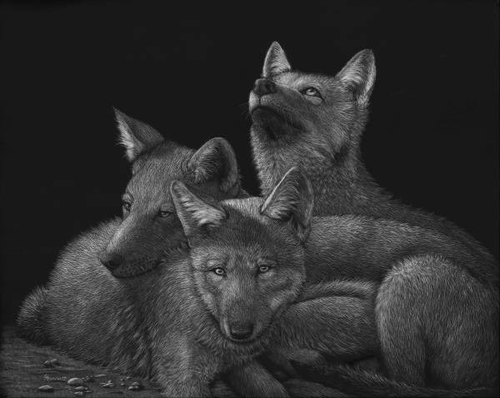 06-Wolf-Pups-Lorna-Hannett-Animals-Drawings-Scratched-out-of-Ink-with-the-Scratchboard-www-designstack-co