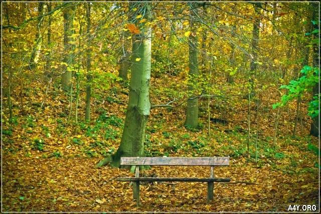 chiếc ghế nằm im trong khung trời tháng 9