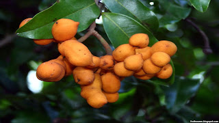 zig zag vine fruit images wallpaper