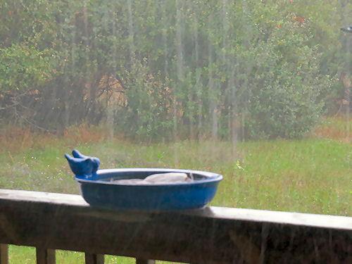 rain falling into a birdbath
