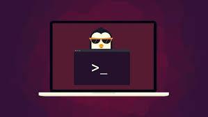 Ubuntu Web Development Setup