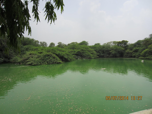 zoo pond