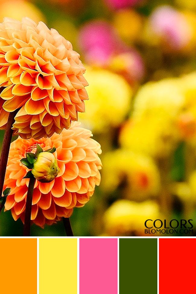 paletas_de_colores_mes_de_septiembre_5
