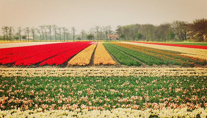 Bellos tulipanes Botánicos