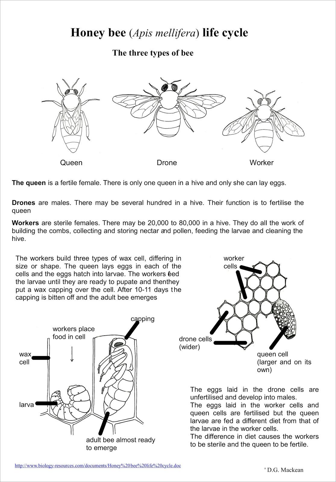 Serbuk Sari Lebah