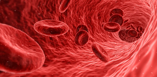 How Much Blood is in the Human Body