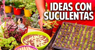 Ideas para plantar suculentas - Trucos del experto