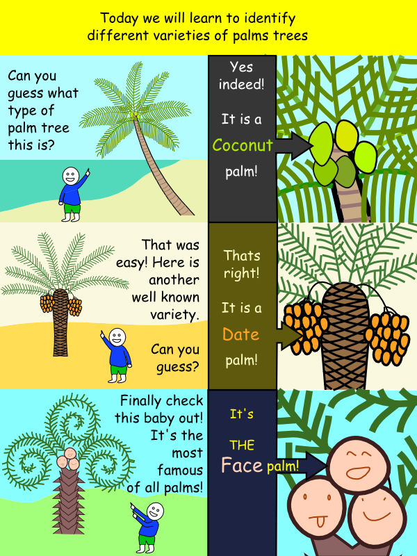Comic - Coconut palm, Date palm and Face palm