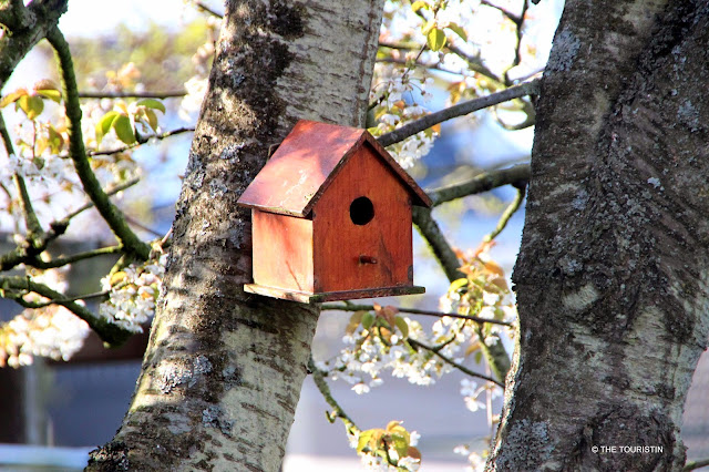 A red birdhouse with a round entrance hole hanging in a white blooming tree.