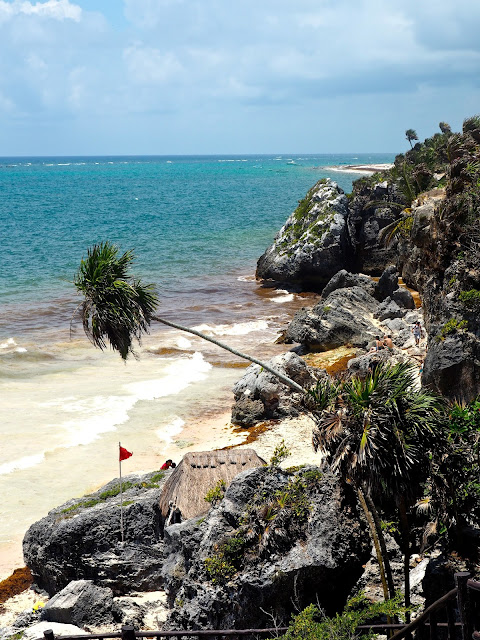 Palm tree hanging out a cliff side, overlooking a beach & the ocean, taken from Tulum ruins, Mexico