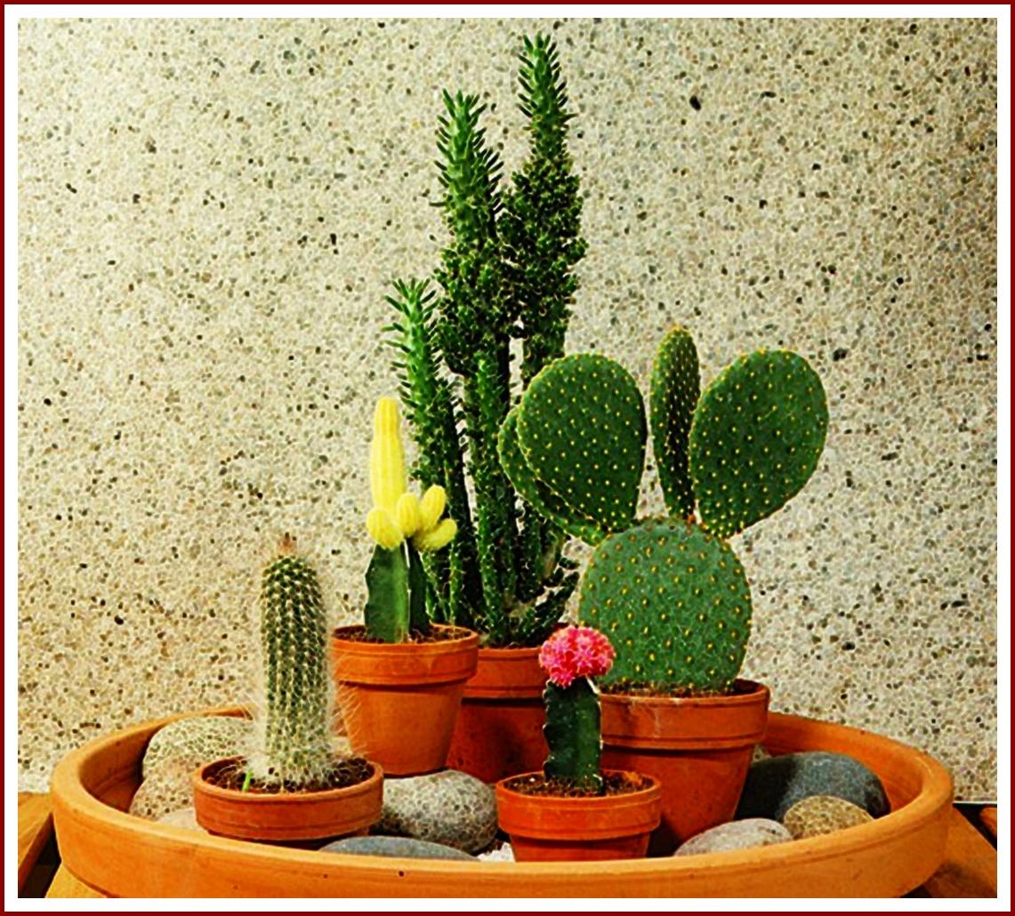 les plantes d 39 appartement et leurs pouvoirs et quatre engrais naturels. Black Bedroom Furniture Sets. Home Design Ideas