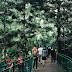 Forest Walk @ Babakan Siliwangi