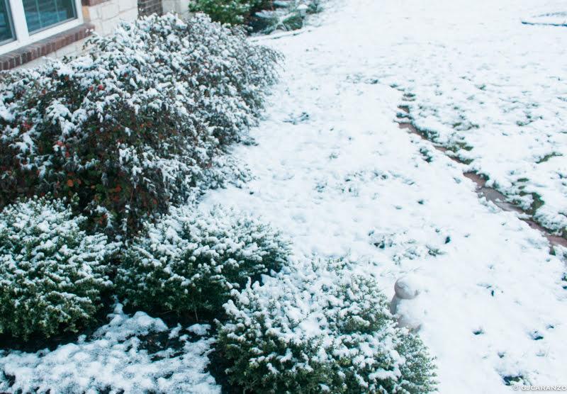 snow in Austin, Texas 2017