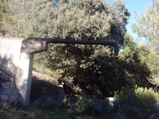 Punto de agua Fuente del Carasol, pinares de Zuera