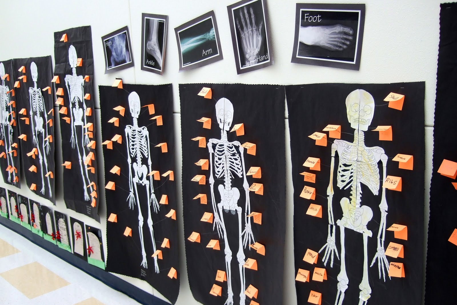 The Inspired Classroom Skeletal System