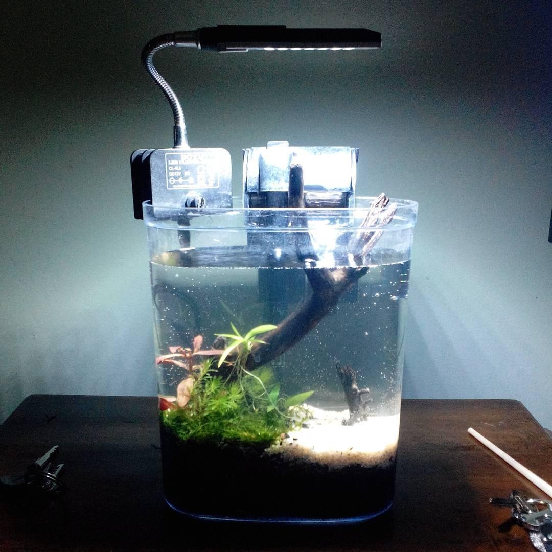 Aquarium Cantik Ini Cocok Untuk Hiasan Di Meja Kerja Nano
