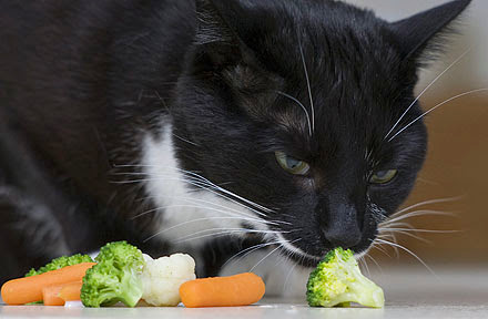 Reader Question: Can Cats Be Fed a Vegan Diet?