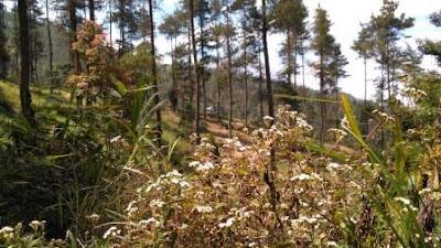 Hutan Wisata Grenden Magelang