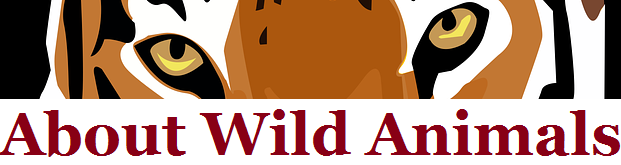 About Wild Animals