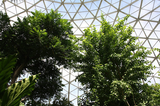 Lush greenery contrasting with the panes of class of the conservatory.
