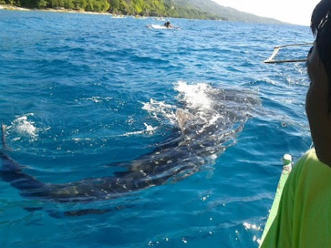 Tan-awan Oslob Cebu -  Whale Shark Watching : Beautiful Cebu