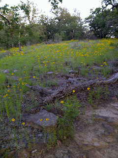 wildflowers on the trail