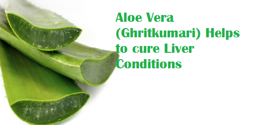 Aloe Vera (Ghritkumari) Helps to cure Liver Conditions