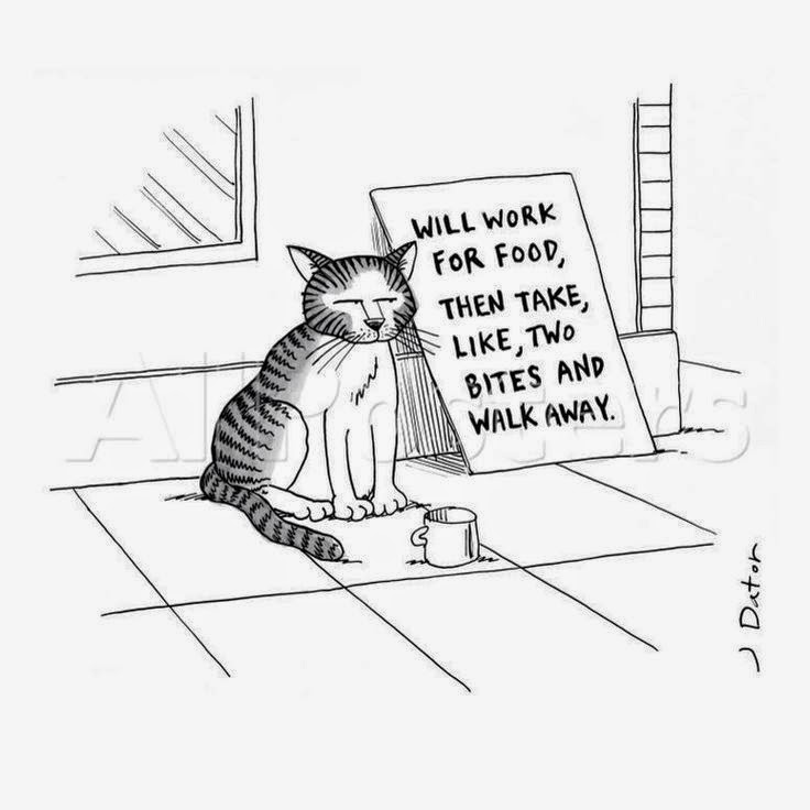 Homeless Street Cat Begging Cartoon Joke Picture - Will work for food, then take like two bites and walk away