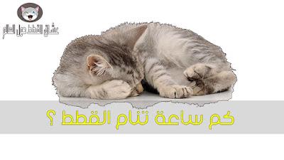 كم ساعة تنام القطط في اليوم ولماذا هي تنام كثيرا ؟ بالتفصيل