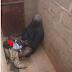 Kalli abinda aka kama wani tsoho yana yi da karamar yarinya a cikin masai